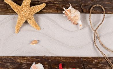 sea shells and starfish with sand