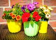Balkonblumen auf dem Tisch