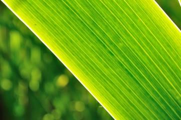 Green zen leaf with blurred background