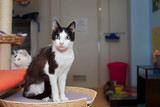 domestic cat - 64408736