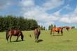 Horse farm in Poland - Bieszczady mountains