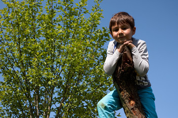Junge klettert auf einen Baum 2
