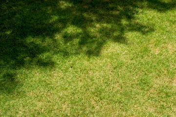 Grass with tree shadow