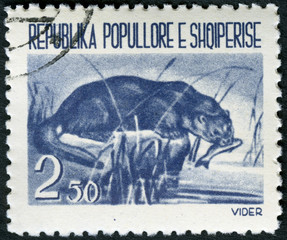 ALBANIA - 1961: shows Otter
