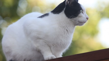cat perches on a suburban fence, then leaves
