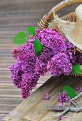 bouquet de lilas fraîchement cueilli
