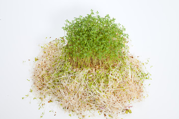 Fresh alfalfa sprouts and cress on white background