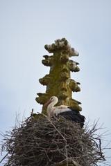 Cigüeña en nido de ramas