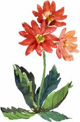 꽃 수채화