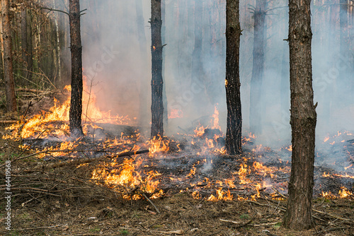 Forest fire - 64419568