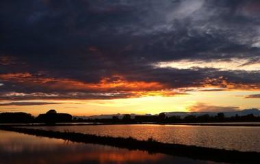 Campo di riso al tramonto dopo un temporale