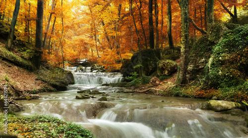 Aluminium Meest verkochte foto's forest waterfall