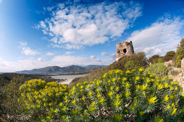 Coastal tower in the vegetation