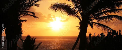 palm tree sunset tropical beach ocean sea clouds banner palm trees in silhouette background - 64421703