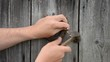closeup hand hammer retro horse shoe on wooden house wall
