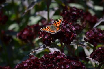 Blomma & Fjäril