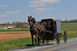Amish horse and buggy on the road