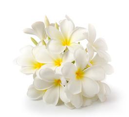 frangipani flower isolated on white on white background