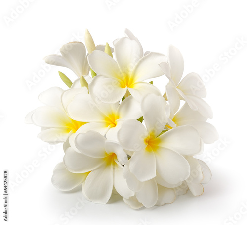 Fotobehang Frangipani frangipani flower isolated on white on white background
