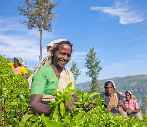 Leinwanddruck Bild Women Tea Pickers in Sri Lanka