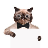 placeholder banner cat poster