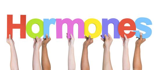 Group of Multiethnic Hands Holding Hormones