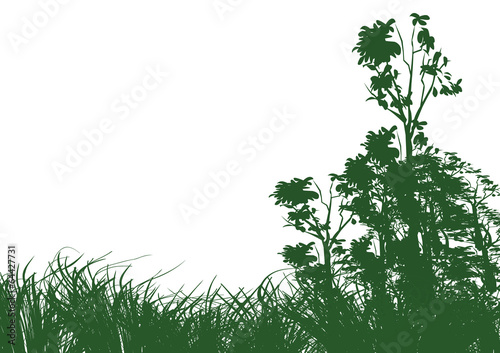 trees and grass on white background - 64427731