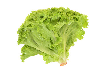 Green Leafy Lettuce Isolated On White Background