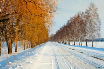 Winter snowy road between birch trees