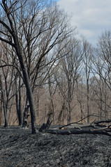 After forest fire 11