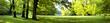 Leinwanddruck Bild - Lush forest