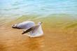 Seagull swimming in the sea