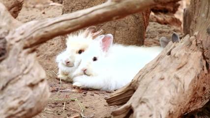 Rabbit in chiangmai-nightsafari, chiangmai Thailand