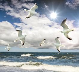 Freiheit: Möwen am Meer :)