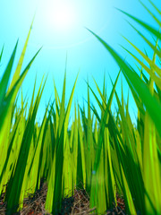 Close up of fresh thick grass with sun and ground
