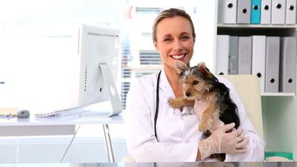 Vet holding a yorkshire terrier