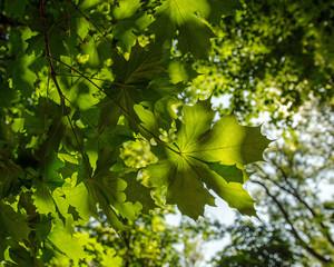 Wald, Blätter, grün :)