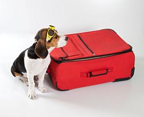 valigia con cane aviatore