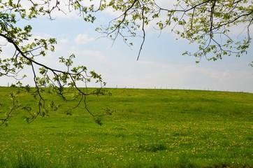 Frühlingswiese mit Löwenzahn