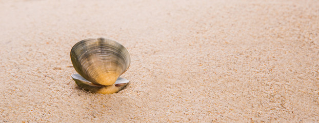 Clam shell on a sandy beach
