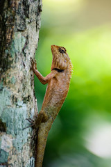 orange lizard sitting on tree