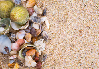 A group of different clams and sea shells on a beach sand