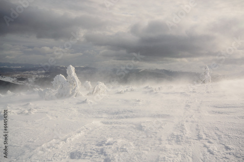 Leinwanddruck Bild Snowstorm. Carpathian, Ukraine.