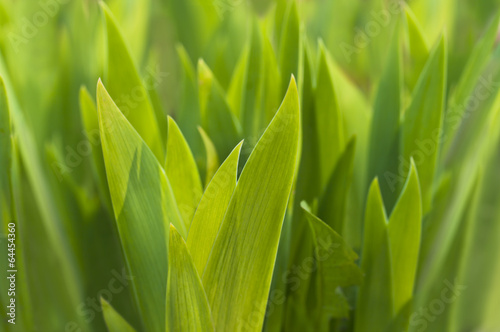 new green leaves in spring