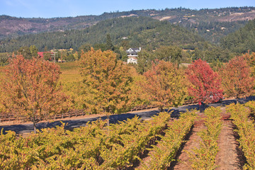 Fall color in Napa valley, Northern California