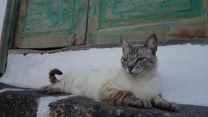 Lanzarote. Gato Callejero En Un Portal