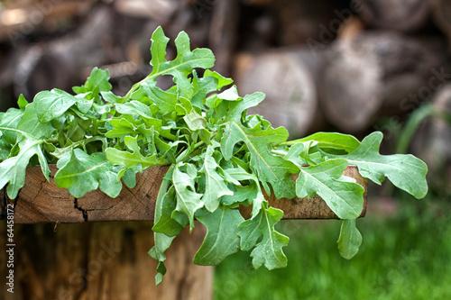 Fresh arugula leaves