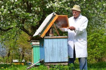 doświadczony pszczelarz pracujący w pasiece w okresie wiosennym