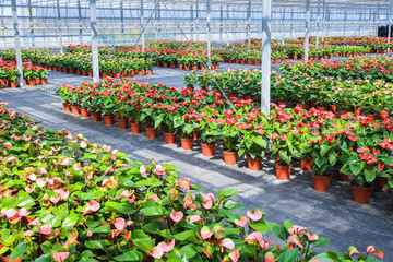 greenhouse flower plant