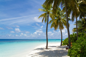 Palm tree and beautiful beach,Maldives